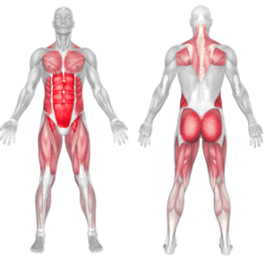 MUSCLES WORKED IN PLANK LEG LIFT