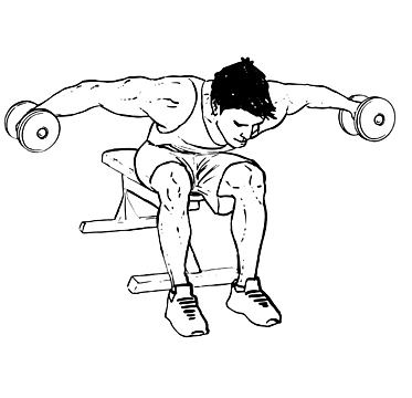 Seated Rear Lateral Dumbbell Raise
