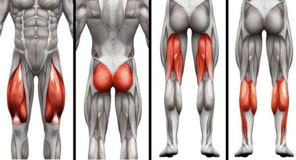 leg muscle workout