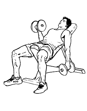 Seated İncline Dumbbell Curl
