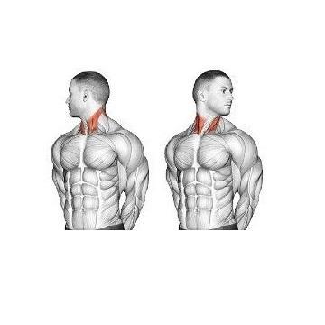 Neck Rotation Stretch
